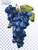 3d Realistic Dark Blue Grapes. Wine Grapes Isolated On Transparent Background. Table Grapes. Fresh F poster