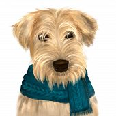 Soft Coated Wheaten Terrier With Long Haired Coat With Green Scarf. Digital Art Portrait Of Dog Terr poster