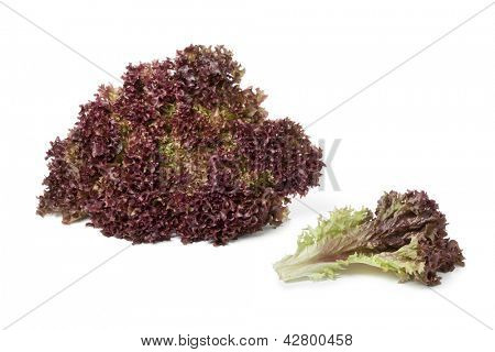 Lollo Rosso lettuce and a leaf on white background