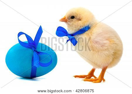 small yellow chick with blue bow and easter eggs