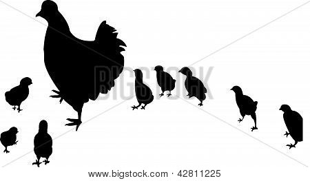 chicken,chicks big family vector
