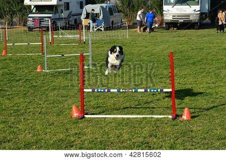 Canine Agility Trials