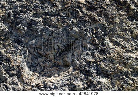 Dinosaur Track Ichnofossil