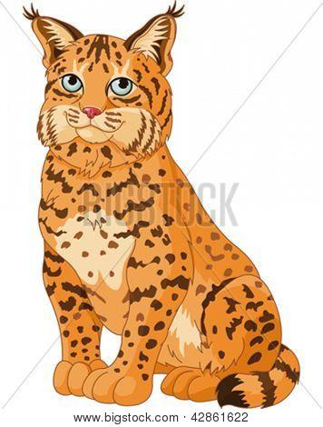 Illustration of wild bobcat
