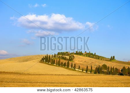Tuscany, Crete Senesi Farmland, Cypress Tree Road, Green Fields. Italy.
