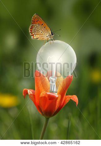 butterfly on flower bulb