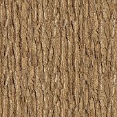 stock photo of elm  - The Bark of Elm - JPG