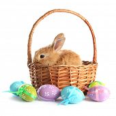 stock photo of dwarf rabbit  - Fluffy foxy rabbit in basket with Easter eggs isolated on white - JPG