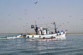 Постер, плакат: Рыбацкая лодка возвращаясь домой гавань с большим количеством чайки