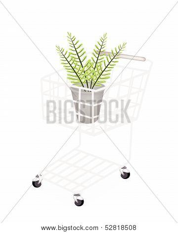 Beautiful Green Fern In A Shopping Cart
