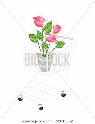 Anthurium Flowers Or Flamingo Lily In A Shopping Cart
