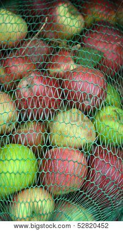 Pic of Industrial apples  in mesh bags backgorund