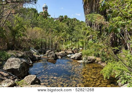 Exotic tropical garden with palm in Sun City