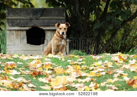 Dog in front of his dwelling place