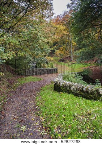 dry stone wall in autumn woodland