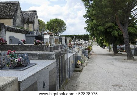 Alley Of Cemetery