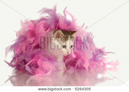 Kitten Playing In Pink Boa
