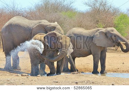 Elephant - Wildlife Background from Africa - Spray and Splash of Cool Water