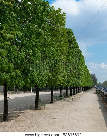 Tuileries Trees, Portrait