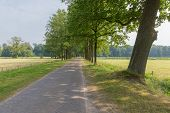 picture of paved road  - Dutch landscape with paving stone country road and trees - JPG