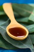 image of septic  - Eucalyptus cough syrup on wooden spoon on fresh Eucalyptus leaves  - JPG