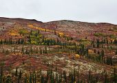 picture of brighten  - Autumn colors brighten the landscape of Alaska - JPG
