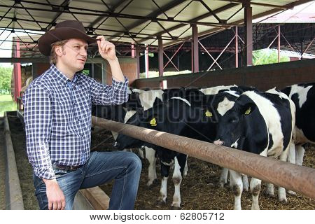 Cowboy and Cows, Farming