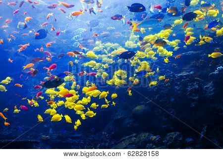 Beautiful tropical fishes