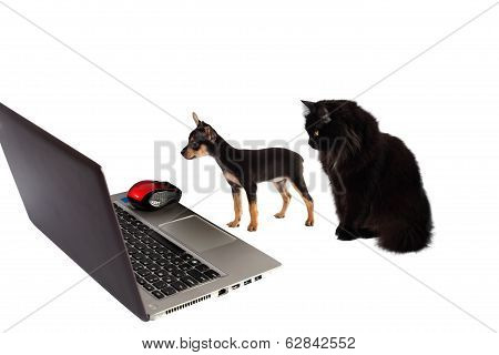 Dog Puppy With  Cat In Front Of A Laptop Isolated On White Background
