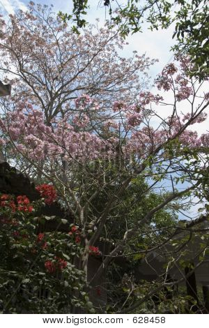 Pink Flower Tree Next To House