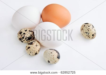 Quail, White, Brown Eggs On The Light Background