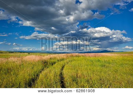 Wheat field from Macedonia