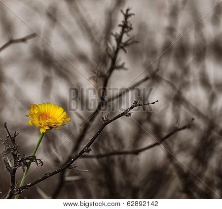 Image of a Beautiful Yellow Desert Wildflower