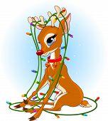 image of christmas lights  - tangled in a Christmas lights garland - JPG