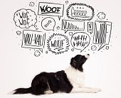 foto of border collie  - Cute black and white border collie with barking speech bubbles above her head - JPG