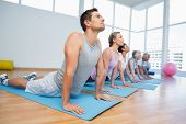 foto of cobra  - Fitness group doing cobra pose in row at the yoga class - JPG