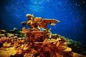 Majestic marine life, beautiful natural background, coral garden and many exotic fishes under transp