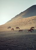 foto of hackney  - Herd of horses pasturing in mountain place