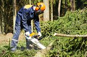 image of chainsaw  - Lumberjack logger worker in protective gear cutting firewood timber tree in forest with chainsaw - JPG