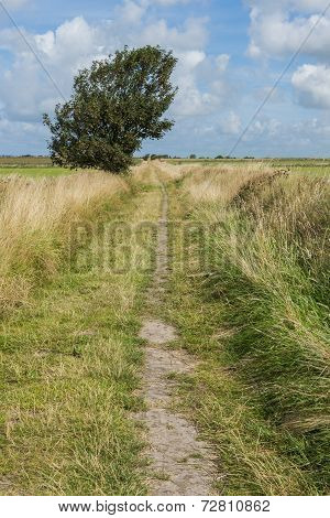 Hiking Path on Texel