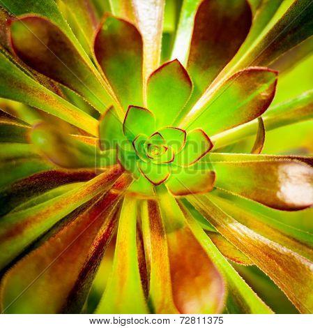 Succulent Plant Background.
