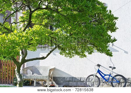 Bike And Tree