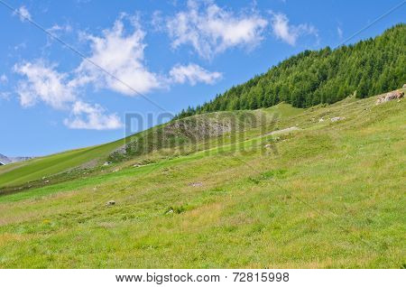 Hills And Sky