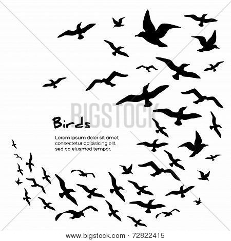 Silhouettes of flying birds