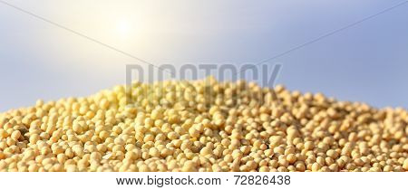 Soybean On Heap