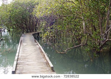 Mangrove Track Near Russell