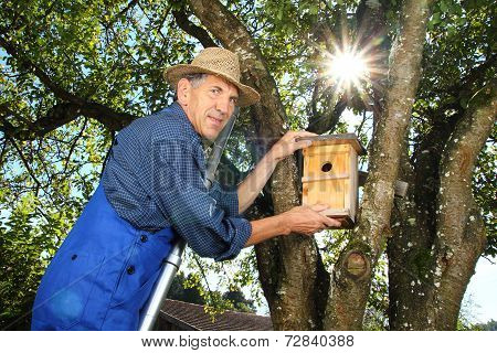 Man Hanging A Birdhouse In A Tree