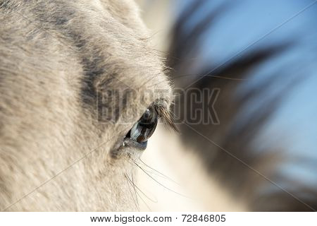 Horse With Wall Eye