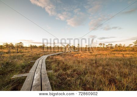 Wooden Footpath On The Bog