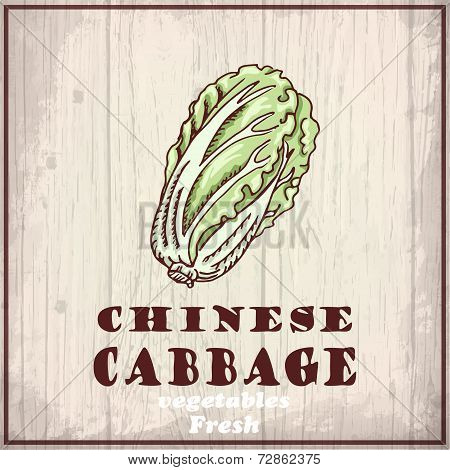 Fresh Vegetables Sketch Background. Vintage Hand Drawing Illustration Of A Chinese Cabbage